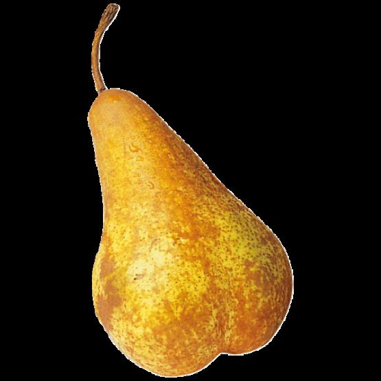 Круша Абата (кг.)